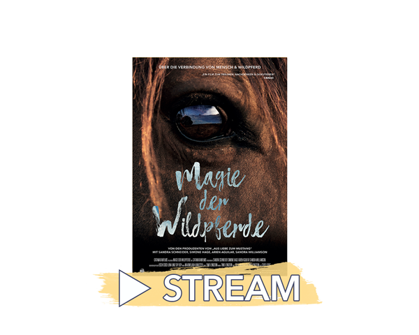Filmcover-Streams-MdW-klein